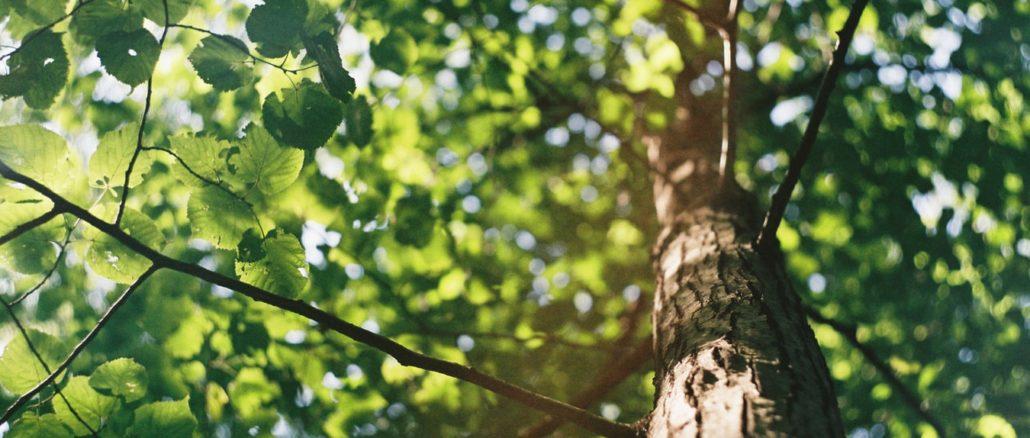 Dans les cimes d'un arbre.